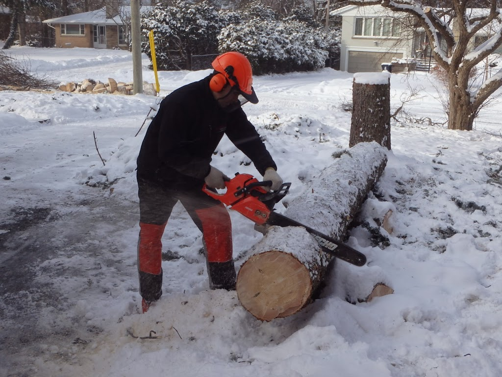 Cutting damaged trees from ice storm toronto 2013